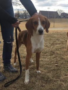 redemption paws hound